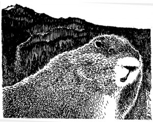 The Mother of All Marmots, Illustration by Diane Wood