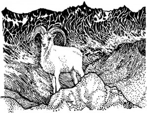 Wild Sheep in the Mountains, Illustration by Diane Wood